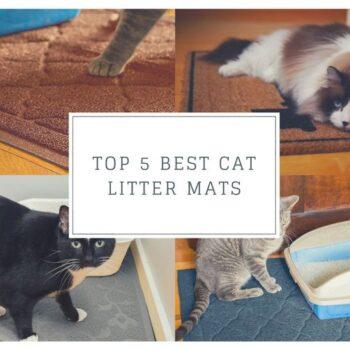 Top 5 Best Cat Litter Mats