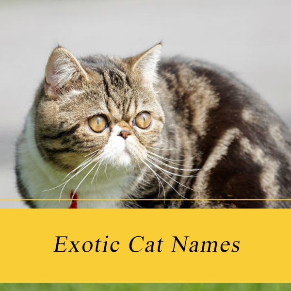 Summary -> Exotic Cat Names