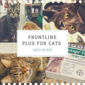 Frontline Plus for Cats Reviews