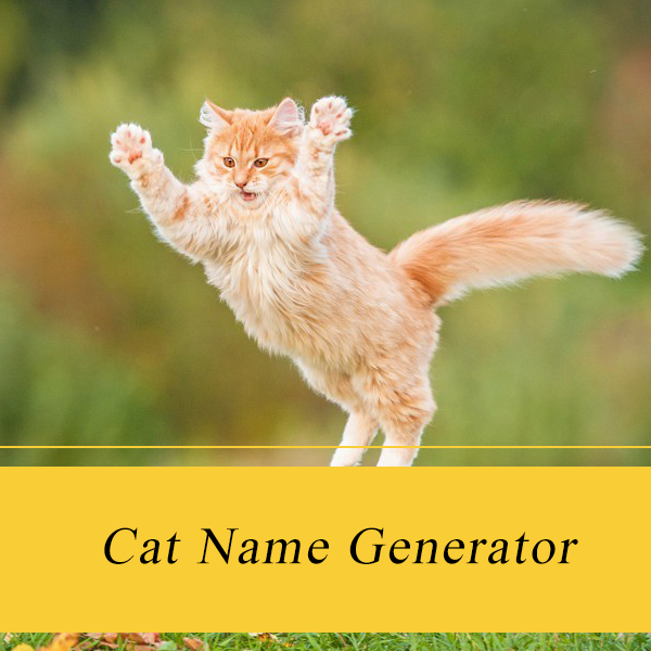 cat name generator kitten name generator 2018