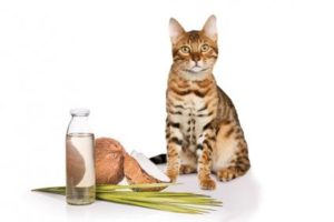 Coconut-oil-and-cat
