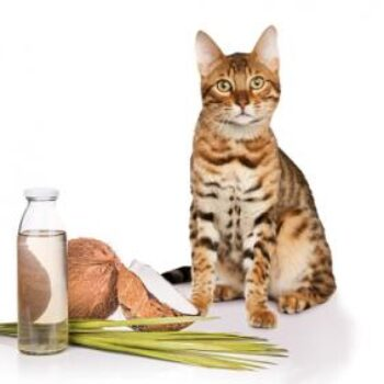 Benefits of Coconut Oil For Cat Fleas