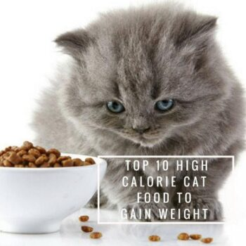 TOP 10 High Calorie Cat Food to Gain Weight