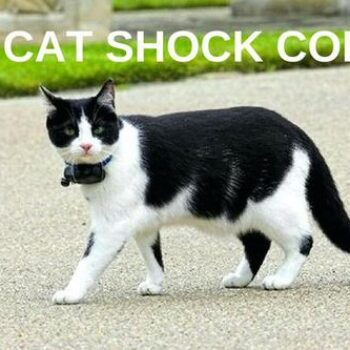 TOP 3 Cat Shock Collars