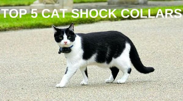 5 Best Cat Shock Collars Reviewed In December 2018