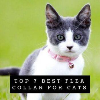 TOP 7 Best Flea Collar for Cats