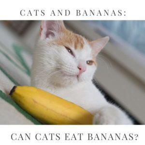 cats bananas