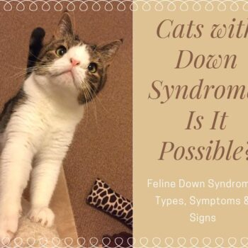 Cats with Down Syndrome: Is It Possible?