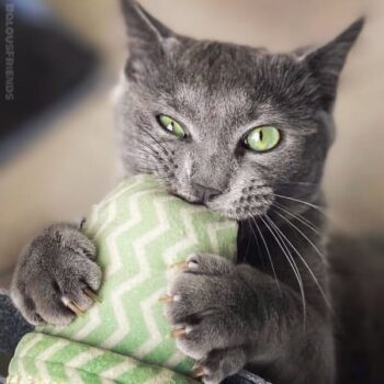 160 Best Names for Grey Cats