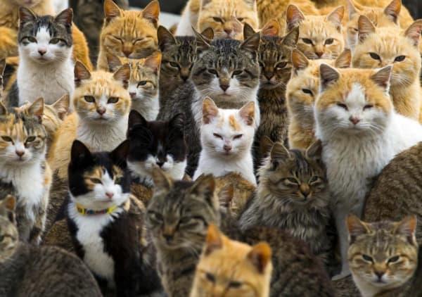 Cat Coat Colors And Patterns