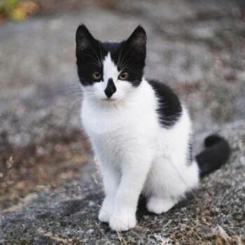 Black and White Cat Names: Pawsome Ideas