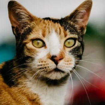 Best Calico Cat Names