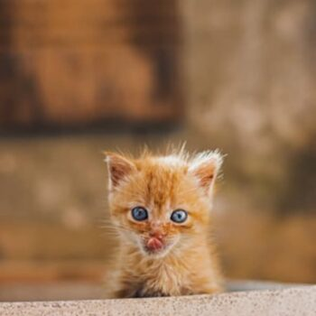 Unique Cat Names for Your Special Kitty