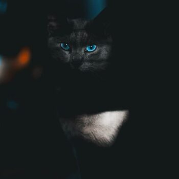 Black Cat with Blue Eyes: Interesting Facts