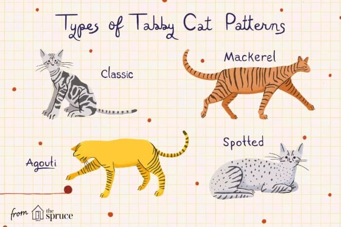 types of Tabby Cat patterns