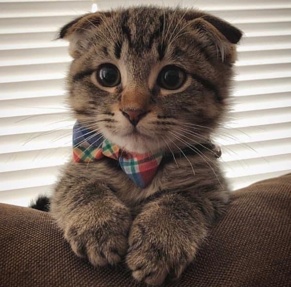 Best Punny Cat Names