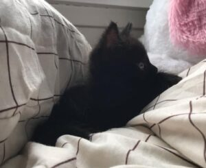 Creative Names for Black Cats