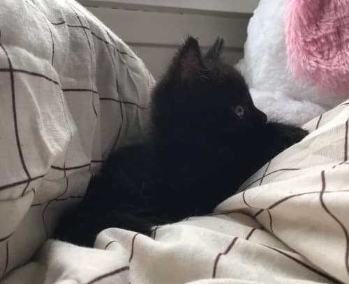 175 CREATIVE NAMES FOR BLACK CATS