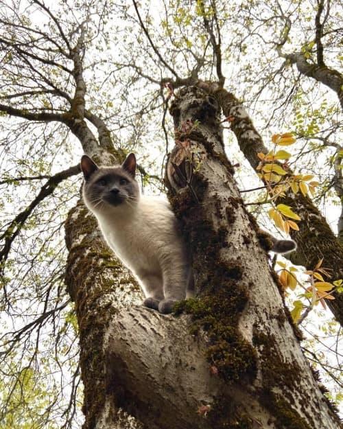 Smoke point cat