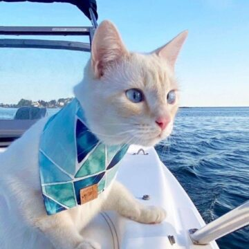 Flame Point Siamese: Facts, Genetics, and Personality