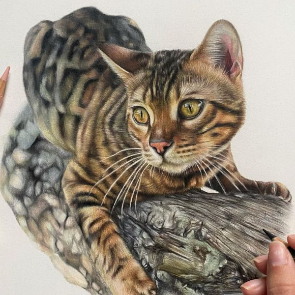 Appearance-Based Bengal Cat Names