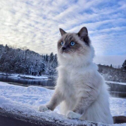 Badass Names for a Ragdoll Cat