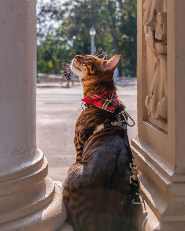Cool Bengal Cat Names