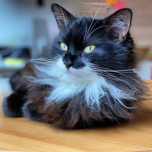 Cool Tuxedo Cat Names