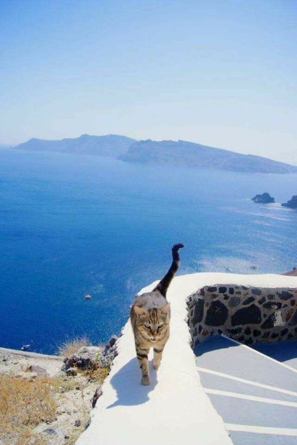 Greek Cat Names Inspired by Geography