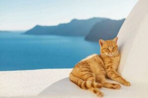Greek Cat Names for Male and Female Kittens