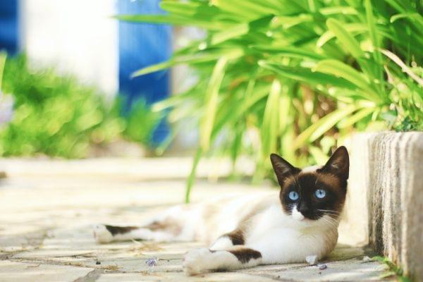 Greek Female Cat Names