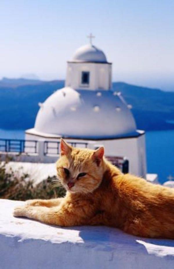 Greek Mythology God Cat Names