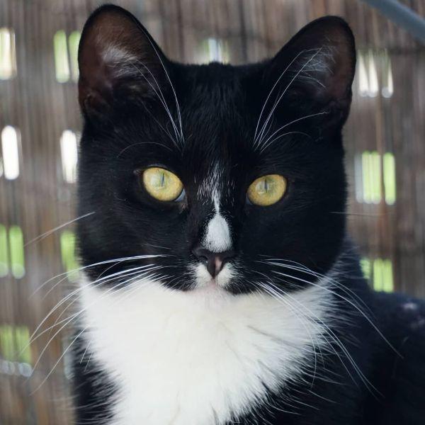 Male Tuxedo Cat Names