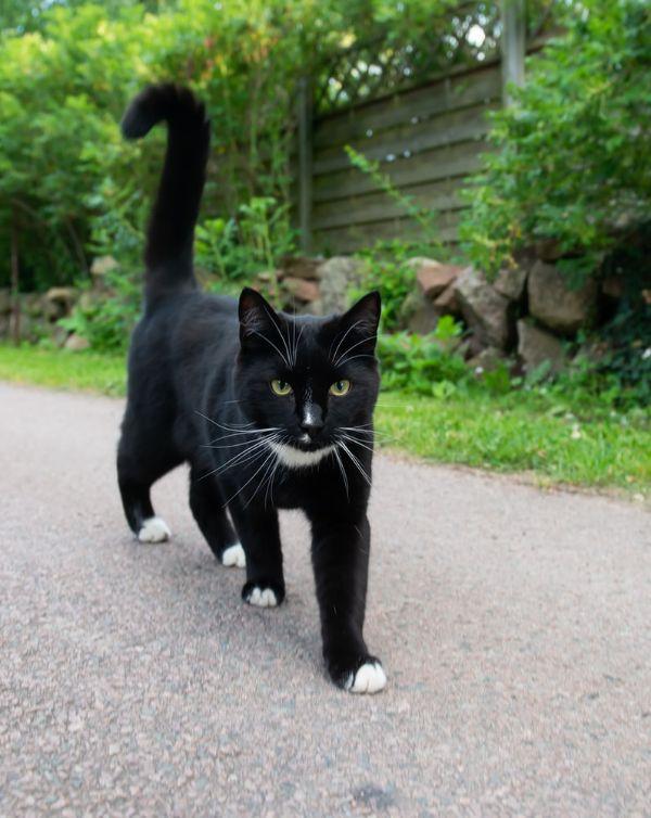 Popular Cat Names for Tuxedo Cats