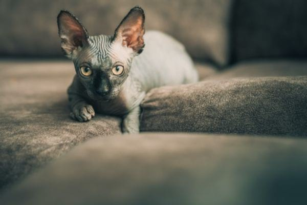 Popular and Cool Egyptian Cat Names
