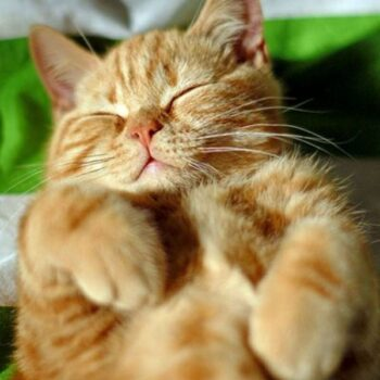 Common Cat Sleeping Positions: What They Say About Your Kitty