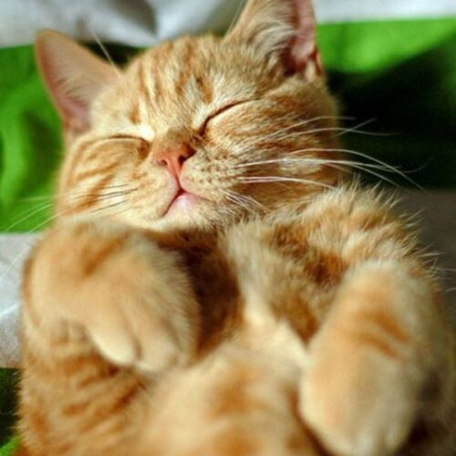 Cat Sleeping Positions What They Say About Your Kitty