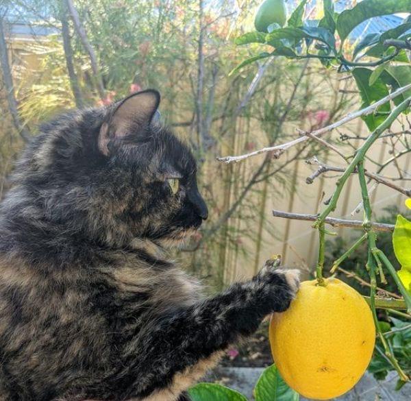 Citrus: orange, lemon, lime, and grapefruit