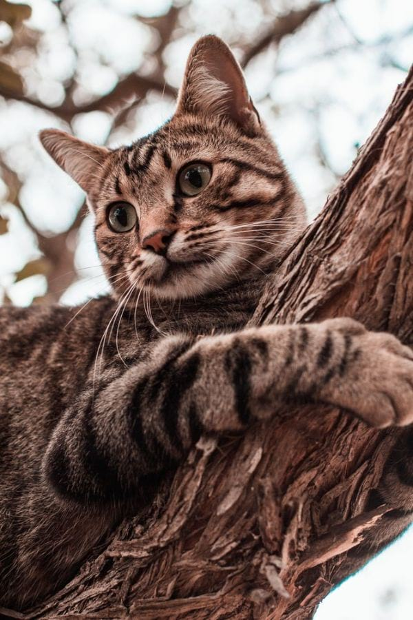 Cool and Cute Cat Names for a Tabby