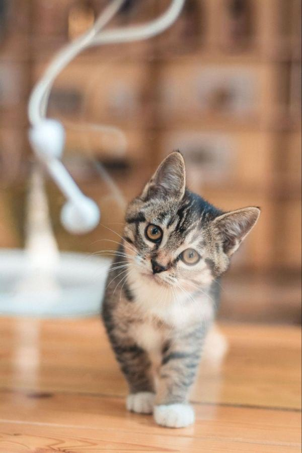 Famous Cat Names for a Tabby