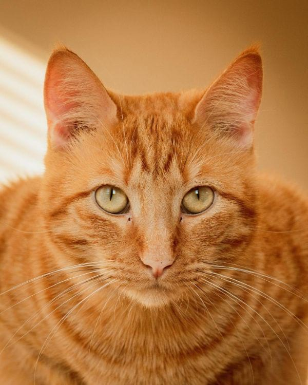 Male Tabby Cat Names