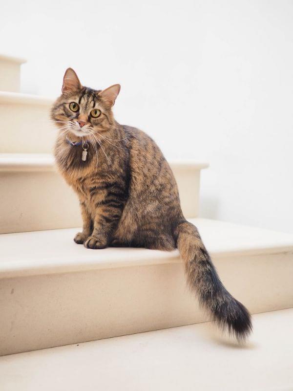 Pattern-Inspired Cat Names for Tabby
