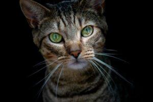 Tabby Cat Names: Inspirational Ideas
