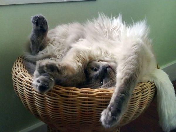 The Acrobat Sleeping Position