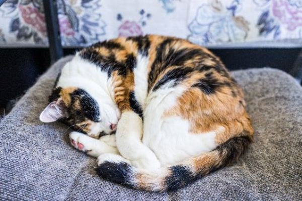 The Cat Curled-Up Position