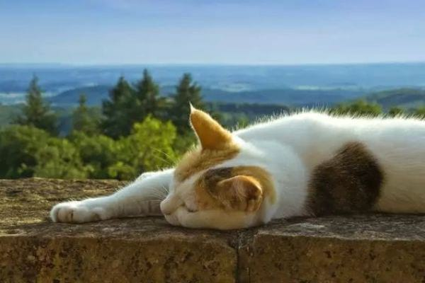 The Cat Lying On Side Position