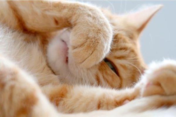 Understanding a Cat's Sense of Smell