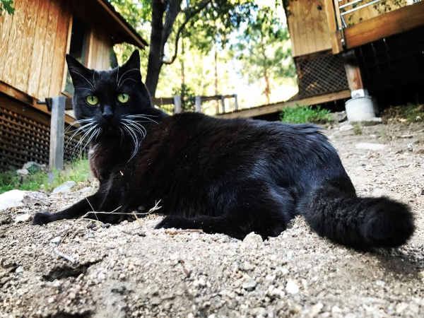 Why Do Cats Roll in the Dirt: The Main Reasons